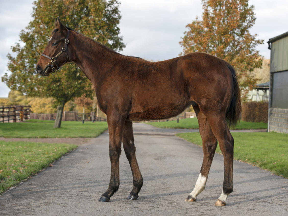 Lot 691 BEWITCHMENT1
