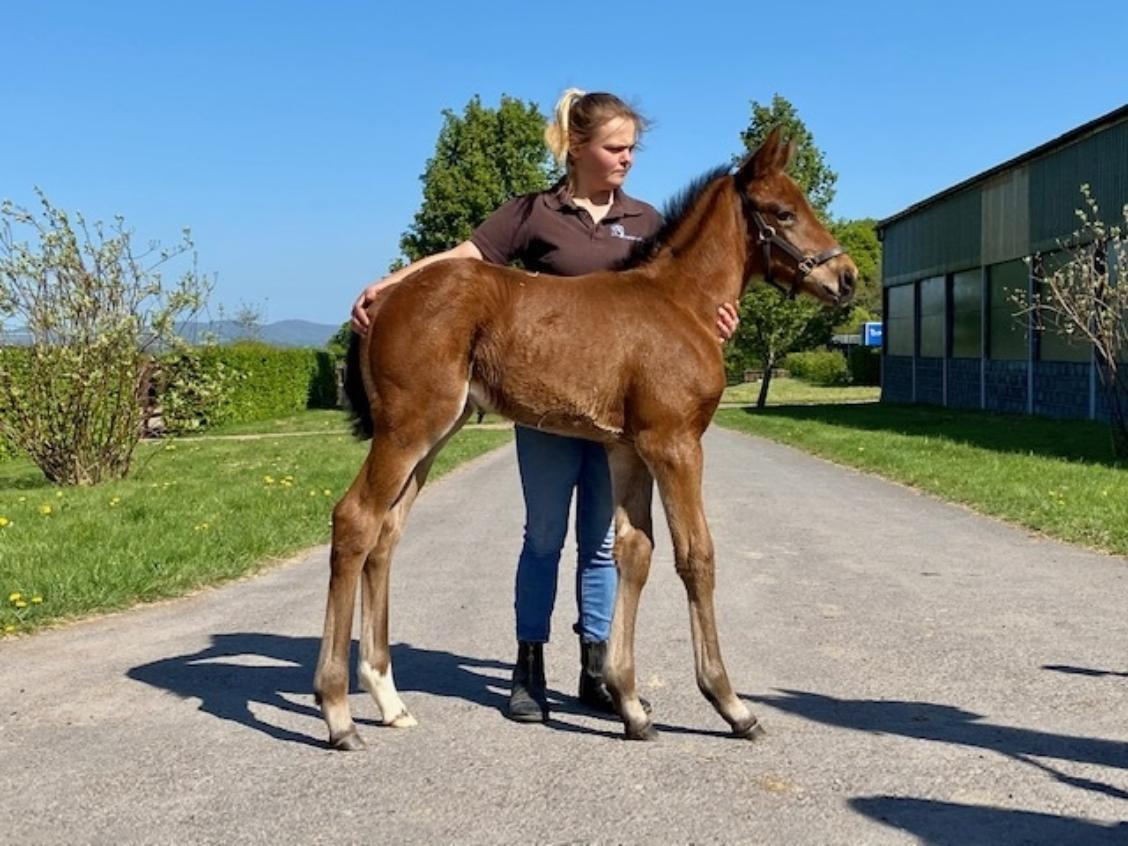 Sea the Stars x Craft 2020 filly 20 04 20