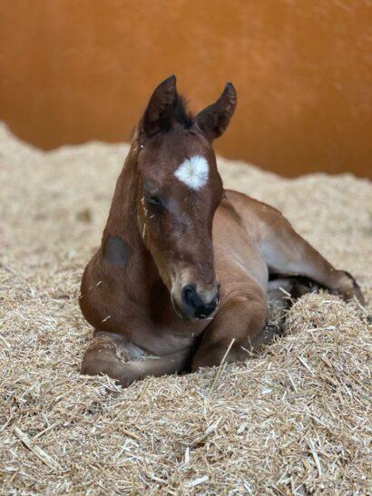 Fulminate foal