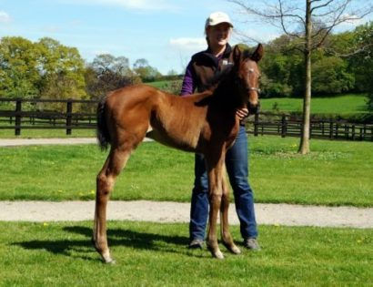 Lord Kanaloax Common Knowledge17filly180417 Fdl3 Tfnm BR