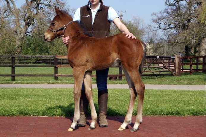 Battle of The Nile foal