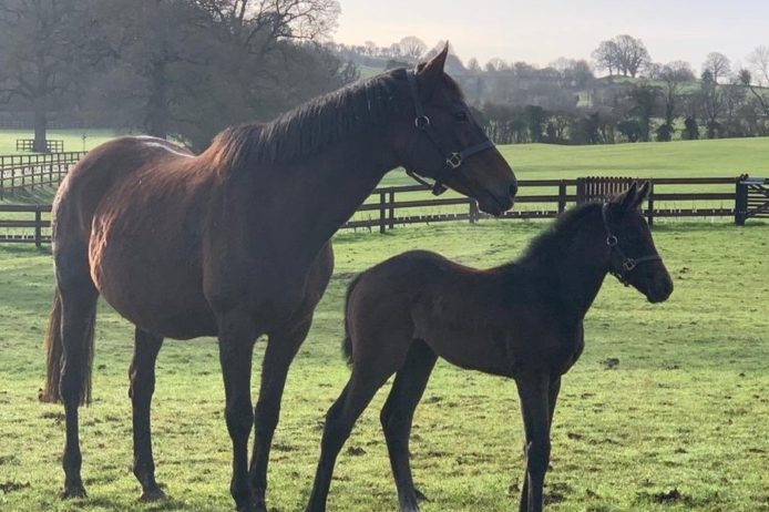 Common Knowledge and RL filly2