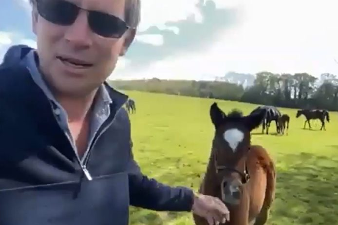 DR and foal