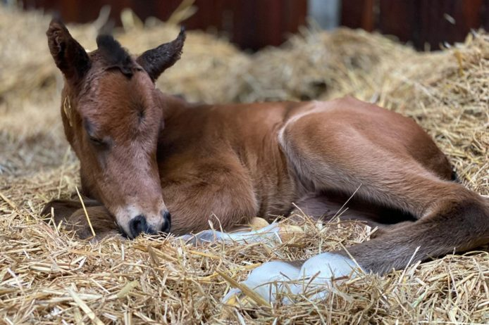 First foal 2021