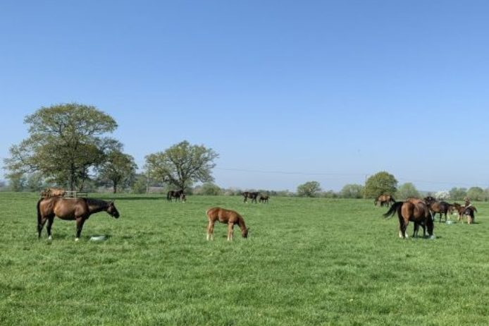 Mares and foals 2