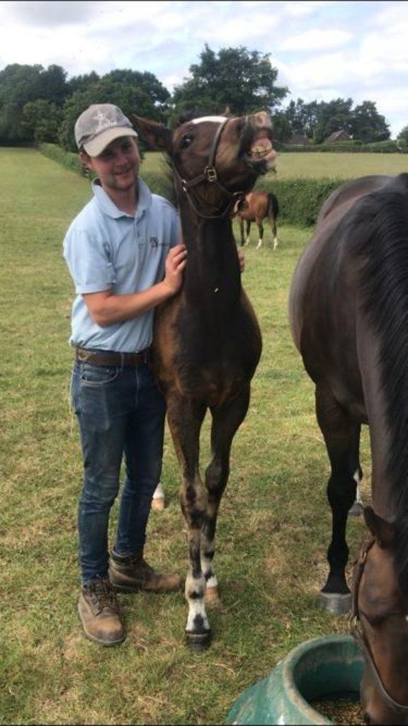 Barry foal