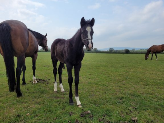 Beldale Memory foal