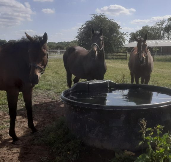 Mares and water