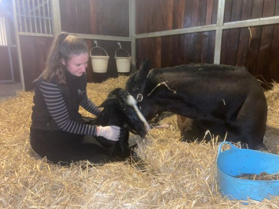 Sophie and Beldale Memory foal