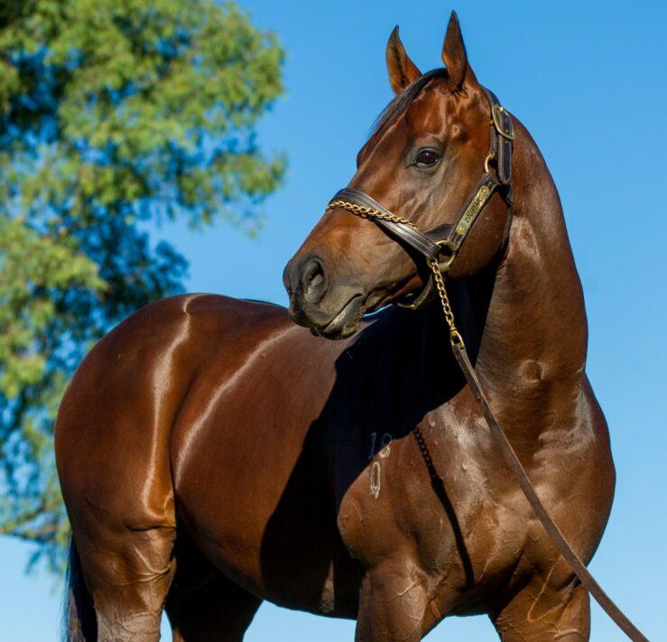 Widden Stallions Zoustar 26 03 18 Sharon Lee Chapman 0483