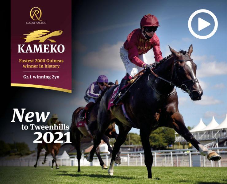 QR Kameko Website 1480x1200 V01
